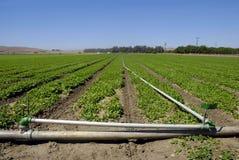 Spinach Crop Stock Photos