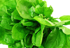 Spinach in detail Stock Image