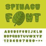 Spinach font. Useful Herbs alphabet.  Stock Photo