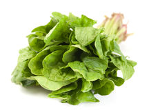 Spinach fresh herb. Spinach fresh green herb leaf on white royalty free stock image
