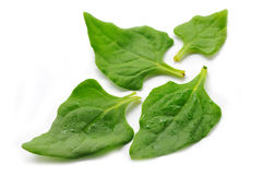 Spinach fresh leaves. On the white Stock Photos