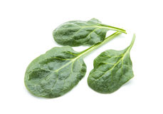 Spinach. Fresh spinach leaves isolated on white background Royalty Free Stock Photo
