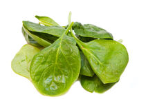 Spinach 1 Stock Photography
