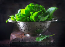 Spinach. Fresh organic spinach leaves in metal colander on a wooden table Royalty Free Stock Photo