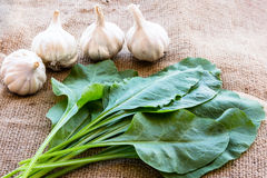 Spinach and Garlic. Super food for health royalty free stock images