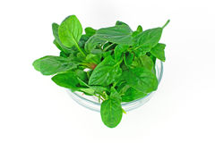 Spinach in glass bowl Stock Image