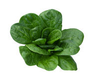 Spinach Isolated. On a white background. Isolation is on a transparent layer in the PNG format royalty free stock images