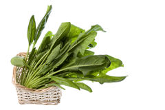 Spinach Isolated Stock Photos