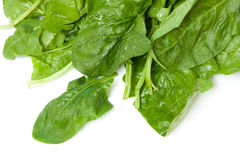 Spinach isolated on white Royalty Free Stock Images