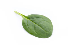 Spinach on the isolated white. Royalty Free Stock Image