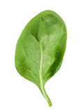Spinach leaf Stock Images