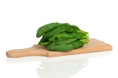 Spinach leaf Stock Image
