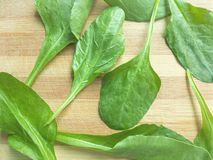 Spinach leaf background Stock Photos