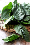 Spinach leaf for cooking elaboration Stock Images