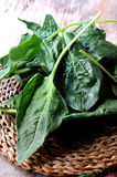 Spinach leaf for cooking healthy vitamin ingredient Stock Image
