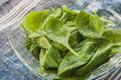 Spinach leaf fresh close up Royalty Free Stock Image