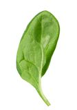 Spinach leaf Royalty Free Stock Image