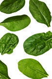Spinach leaf isolated Royalty Free Stock Photos