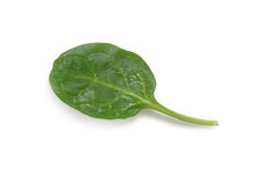 Spinach leaf Royalty Free Stock Photos