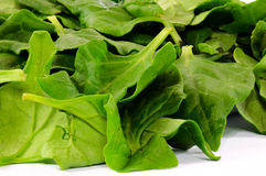 Spinach leafs Royalty Free Stock Images