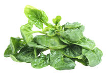 Spinach leaves. In isolated white background Stock Images