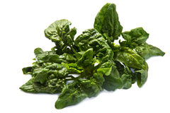 Spinach leaves Royalty Free Stock Photo