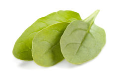 Spinach leaves. Three leaves of spinach isolatetd on white background stock image