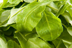 Spinach leaves. Fresh raw organic spinach leaves Stock Photography