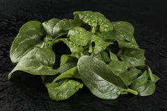 Spinach leaves. Fresh spinach leaves on black background Royalty Free Stock Photos
