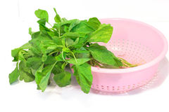 Spinach leaves in basket. Royalty Free Stock Images
