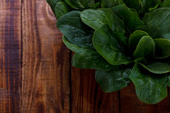 Spinach leaves in a basket Stock Photo