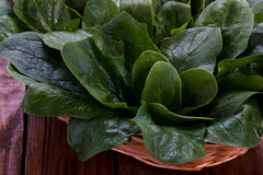 Spinach leaves in a basket Stock Photography