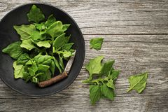 Spinach leaves in bowl Stock Image