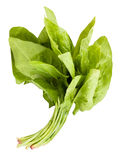 Spinach leaves bunch Royalty Free Stock Photography