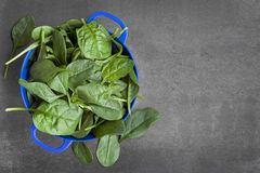 Spinach Leaves in Colander. Over dark slate Royalty Free Stock Photos