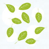 Spinach Leaves Doodle Stock Photo