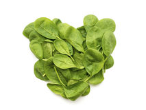 Spinach leaves Royalty Free Stock Photos