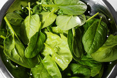 Spinach leaves. Green fresh raw spinach leaves Stock Photography