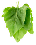 Spinach leaves isolated on the white background Royalty Free Stock Photos