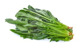 Spinach leaves. Isolated on white background royalty free stock photos