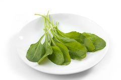 Spinach leaves on plate Stock Photography