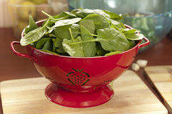 Spinach Leaves in a Red Strainer Stock Image