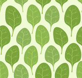 Spinach leaves seamless pattern. Vector background Veggie plants Royalty Free Stock Photos