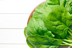 Spinach leaves Royalty Free Stock Images