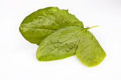 Spinach Leaves on White. Three young spinach leaves isolated on a white background Royalty Free Stock Photo