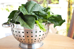 Spinach in metal colander Stock Photo