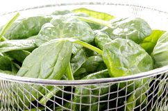 spinach in a metal sieve Stock Images