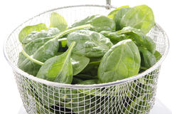 Spinach in a metal sieve after washing Royalty Free Stock Photo