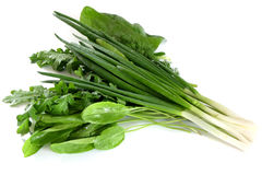 Spinach onions sorrel parsley fennel. Arugula Stock Photo