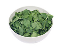 Spinach organic baby leaves. In ceramic bowl isolated on white background Stock Images